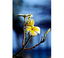 Lei Flower Photographic Print
