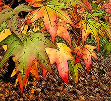 Autumn Leaves # 2 by George Petrovsky
