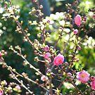 Pink II by Catherine Davis