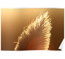 Macro Bunny Tail Poster