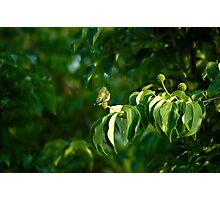 Hummingworld Photographic Print