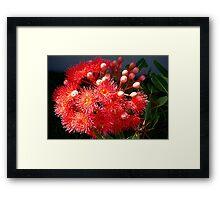 Eucalyptus Red Framed Print