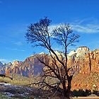 Zion by Harry Oldmeadow