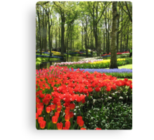 A Kaleidoscope of Colours - Keukenhof Gardens in Spring Canvas Print
