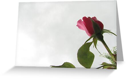 Rose Against The Sky by gypsykatz