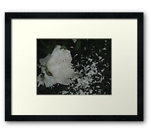 WHITE PEONIES DROPPING PETALS  GREEN GRASS  Framed Print