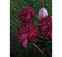 PINK & RED Photographic Print