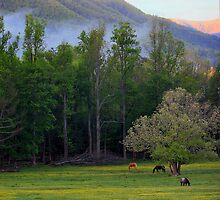 Morning Graze by Lisa G. Putman