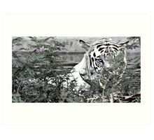 Eye of the tiger... Art Print