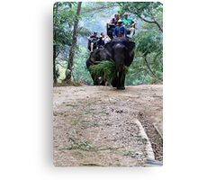 elephants in chiang mai Canvas Print