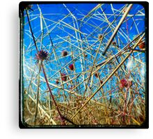 Red in the Blue Canvas Print
