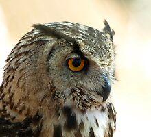 Euroasian eagle owl by MichaelBr