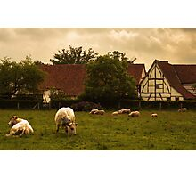 Country scene Photographic Print