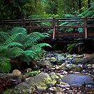 Badgers Creek  by Christine  Wilson Photography