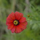 Hovering flower by Graeme M