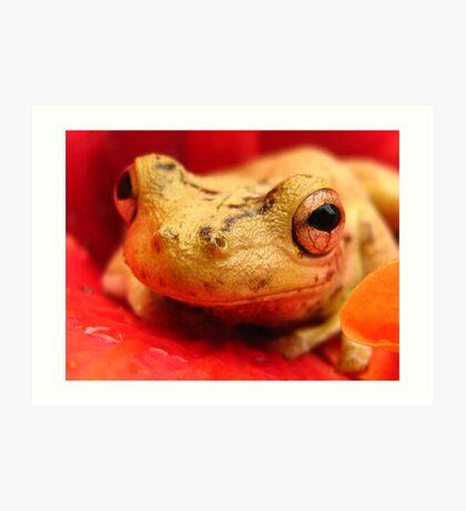tree frog on hibiscus Art Print