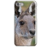 Eastern Grey Kangaroo Portrait iPhone Case/Skin