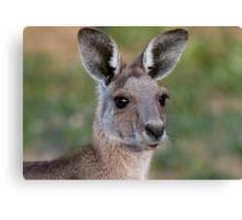 Eastern Grey Kangaroo Portrait Canvas Print