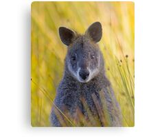 Lonely Swamp Wallaby 1 Metal Print