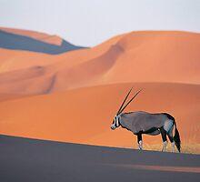 arabian nights by luxiggy