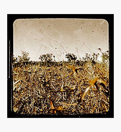 Wild Fields Photographic Print
