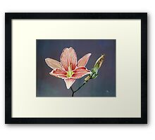 Blooming, Decay and New Beginning Framed Print