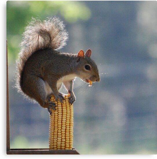 Balancing Act by ArkansasLisa