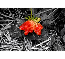 The Odd Strawberrie Photographic Print