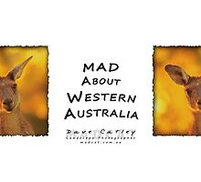 Kangaroo - MAD About Western Australia by Dave Catley