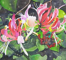 Honeysuckle in my Garden 3 by Tonkin