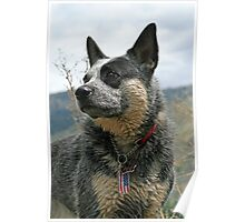 Prideful ACD Poster