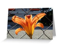 behind the fence ... the sun! Greeting Card