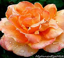 #420    Rainy Day Rose by MyInnereyeMike