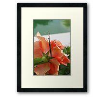 FLORIDIAN STICK BUG Framed Print