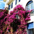 Draped in Bouganvilla by SylviaCook