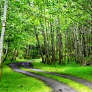 Into a Dream....the Hoh Rain Forest by SylviaCook