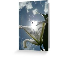 Sun Lilly Greeting Card