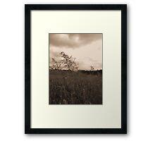 Blowin in da wind 2 Framed Print