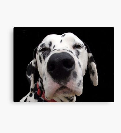 You Talking to Me ?  Canvas Print