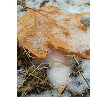 Fallen Snow and Leaves Photographic Print