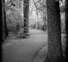 Path through the woods!! by Cmstrach