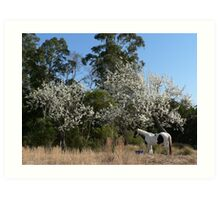 The Old Piebald & the Old Pear Trees - Warrens Lane Art Print