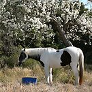 Paint Horse & Pear Trees by louisegreen