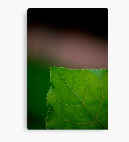 Green Corner Canvas Print