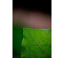 Green Corner Photographic Print