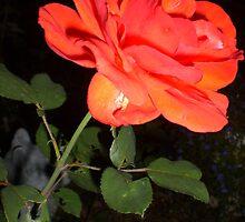 Roses are love's truest language by Ellaine Walker