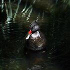 Duck by YannB