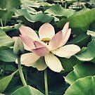 Beautiful flower by AprilRichardson