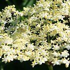 www.lizgarnett.com - June 02 by Liz Garnett
