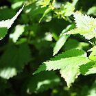 www.lizgarnett.com - June 03 by Liz Garnett